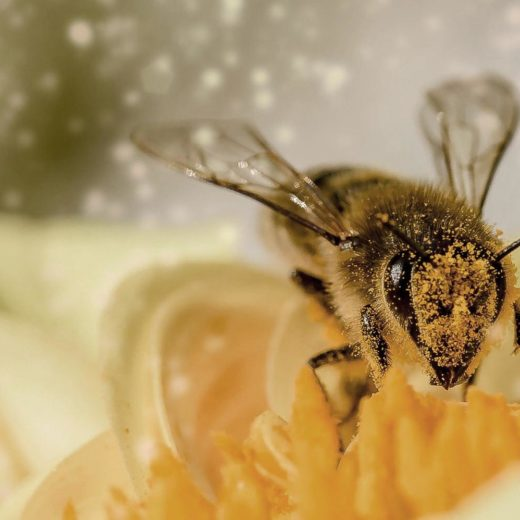 insektenhotel selber bauen
