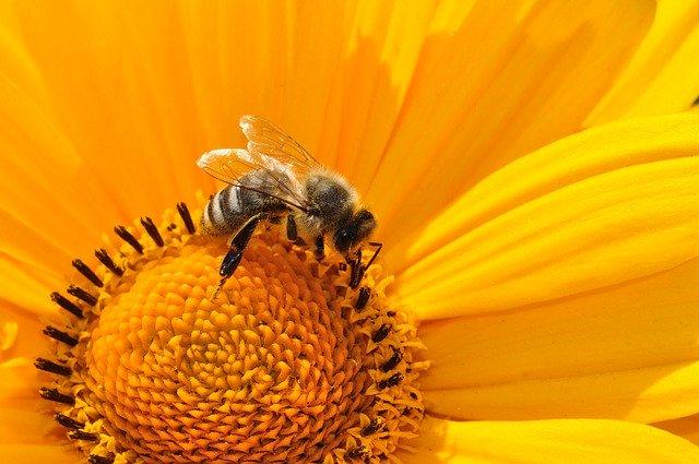 Damit Bienen die beste Überlebenschance haben, sollte ein guter Insektenhotel Standort gewählt werden.