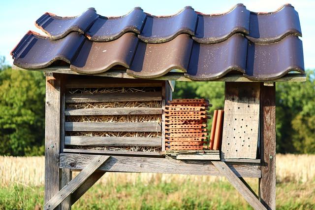 Eine südliche Ausrichtung bietet viel Wärme, die die Überlebenschancen der Insekten erhöht.