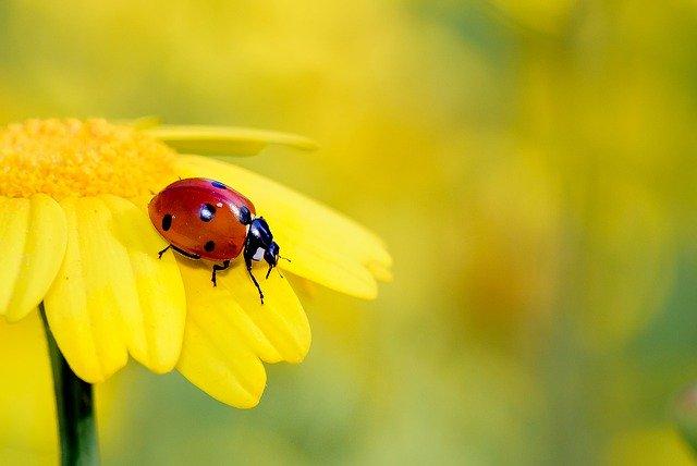 Der Insektenhotel Standort sollte am besten in der Nähe von Nahrungs- und Wasserquellen gewählt werden.